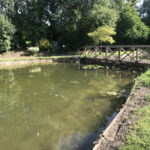 Completed pond cleaning 2 - Norfolk
