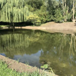 Completed pond cleaning 3 - Norfolk