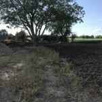 Applying treatment to kill weeds and old grass - Norfolk