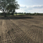 Prepared soil for grass seed and wildflower mixture - Norfolk