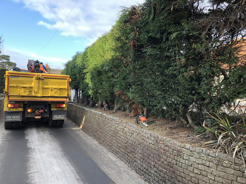 Preparing to remove leylandii hedge 2 - Aylsham